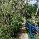 Begrünte Wege auf der Finca Corona