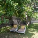 Siesta unter Avocadobäumen