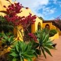 Seitenansicht mit tropischen Pflanzen
