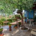 Die Terrasse unter dem Olivenbaum