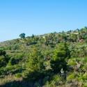Vista al paisaje con palmeras